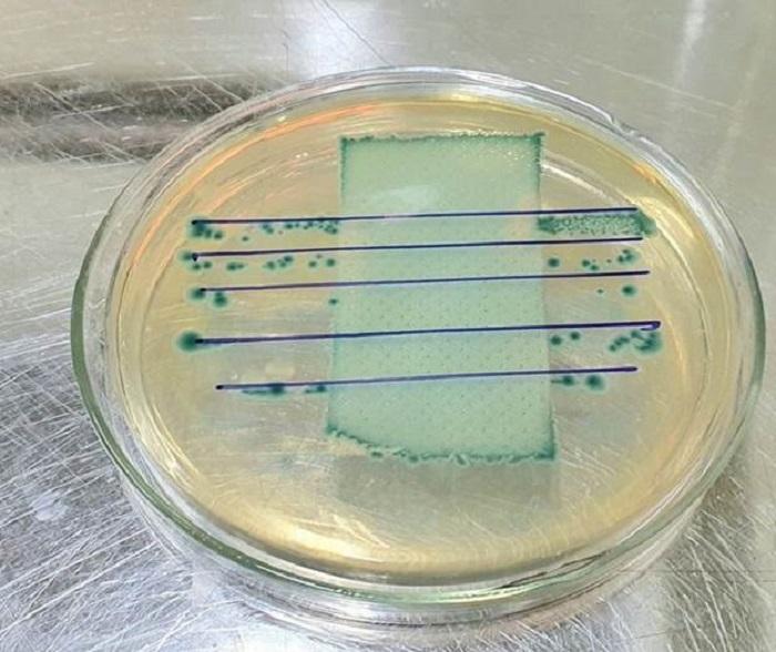 kiểm tra vải kháng khuẩn